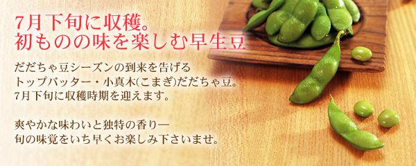 7月下旬に収穫。初物の味を楽しむ極早生豆