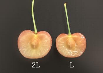 2Lサイズ比較