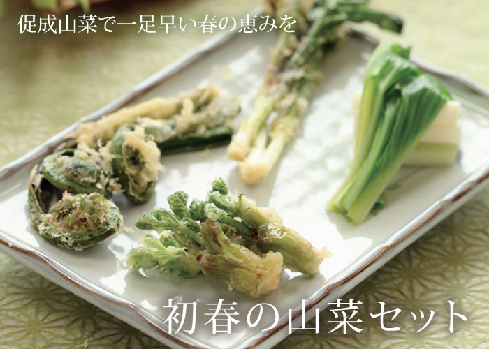 初春の山菜セット