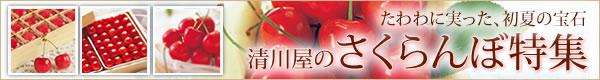 山形・清川屋から、「さくらんぼ」本当の魅力を伝えます。◆清川屋のさくらんぼ特集◆